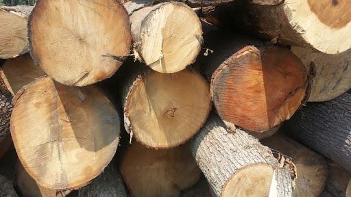 gỗ sồi